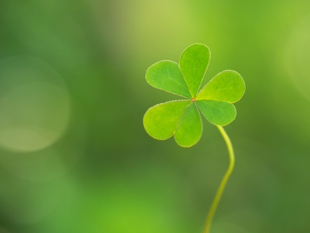 Green clover leaf on green background. Saint Patricks Day. Means hope, faith, love and luck