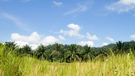Landscape fresh green field palm tree in countryside view with blue sky. Reklamní fotografie
