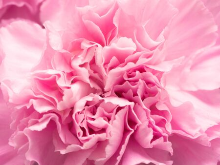 Pink petal flowers in soft style for background