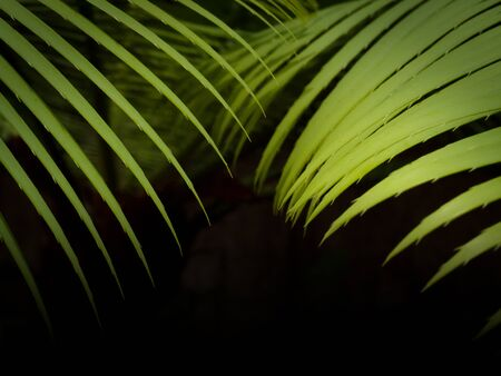 Green tropical palm leaves, floral pattern on black background. Reklamní fotografie