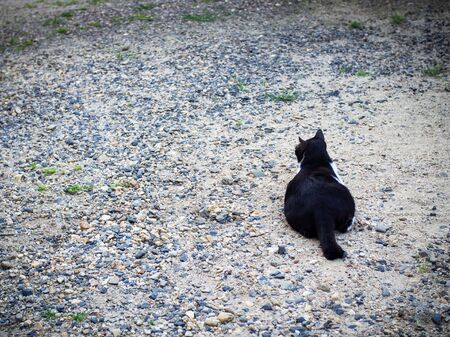 Black cat lay back to camera looking forward in front way. Cat waiting owner. Reklamní fotografie