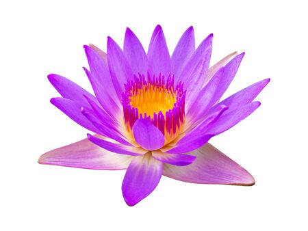 Purple violet lotus flower or water lily isolated on white background. Reklamní fotografie