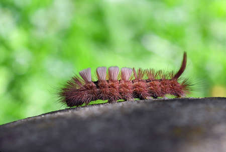The red shaggy caterpillar is on the stone in the green blurred background