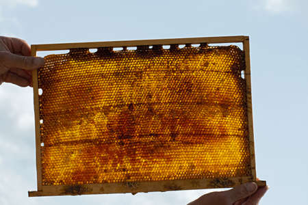 Insolated wooden frame with honeycombs in the hands of the beekeeper on light blue sky background Imagens