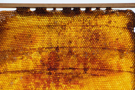 Insolated wooden frame with honeycombs closeup
