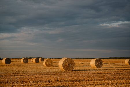 Summer landscape. Cylindrical straw bales lie on a mowed field.