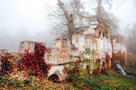 Autumn landscape. Old ruins covered with autumn foliage in fog.