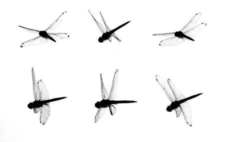 marshland: Isolated dragonfly