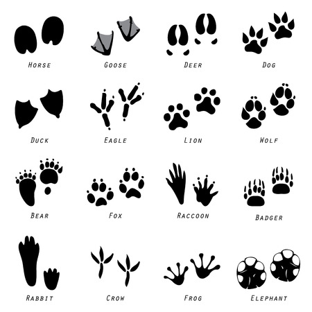 animal tracks: Animal Spoor Footprints Icon Vector Illustration