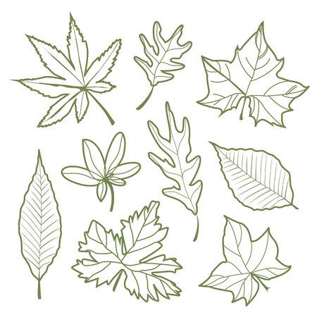 elm: Set of autumn leaves Nature silhouette Icon line Vector illustration