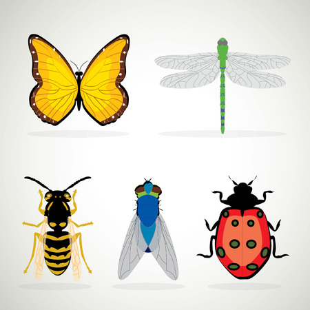 ladybug: Insects realistic colored decorative icons set with ladybug snail wasp isolated vector illustration