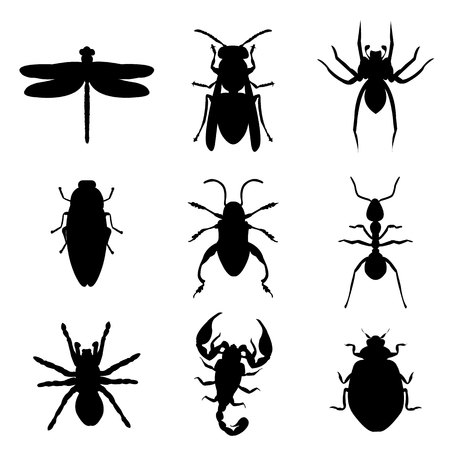 barbel: Insect Bug Animal Silhouette Icon Black Vector illustration