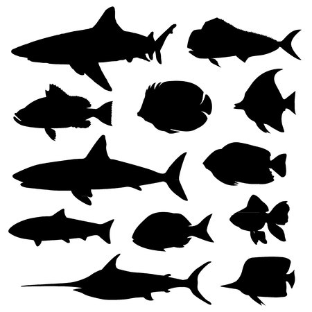 arowana: Illustration vector of different kinds of Fish Silhouette.