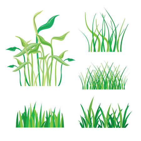 grass isolated: Backgrounds of Green Grass Isolated On White Vector Illustration