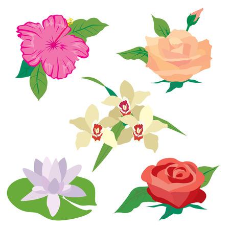 bluebell: Wildflowers set. Poppy, cornflowers, chamomile, bluebell, blindweed, wheat ears Rose Lotus