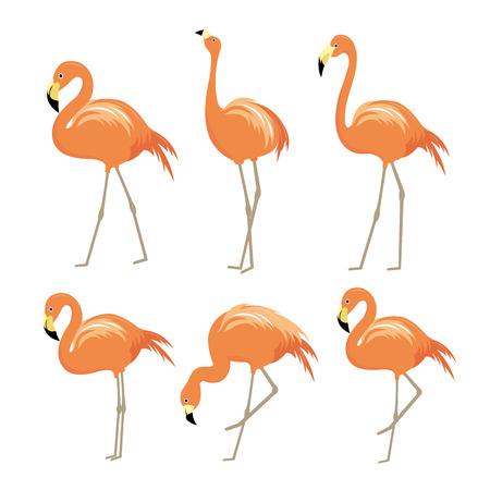 Flamingo Pink Animal Bird Cartoon Character Vector Illustration Illustration