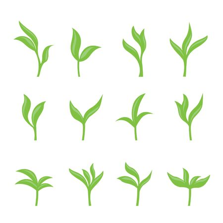 Set of Green Tea Leaves Collection. Leaf isolated Vector illustration.