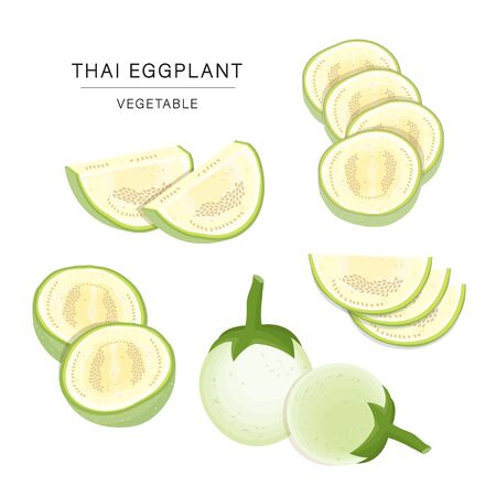 Set of Thai Eggplant Vegetable Slices. Organic and healthy food isolated element Vector illustration.