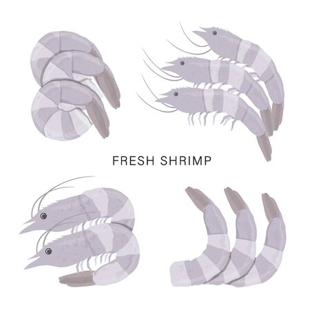 Set of Fresh shrimps or Prawn isolated on a white background. Cartoon  illustration