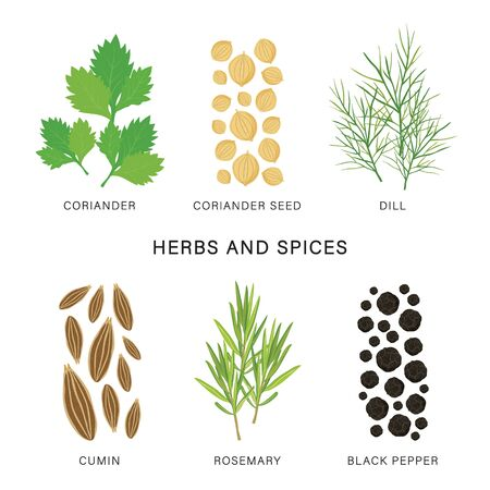 Set of Herbs and Spices. Organic and healthy food isolated element Vector illustration.