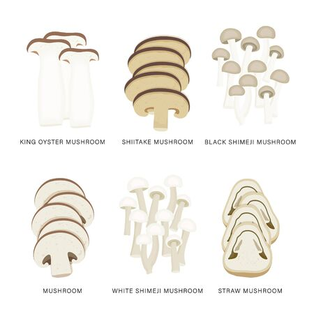 Set of Mushroom Vegetable Slices. Organic and healthy food isolated element Vector illustration.