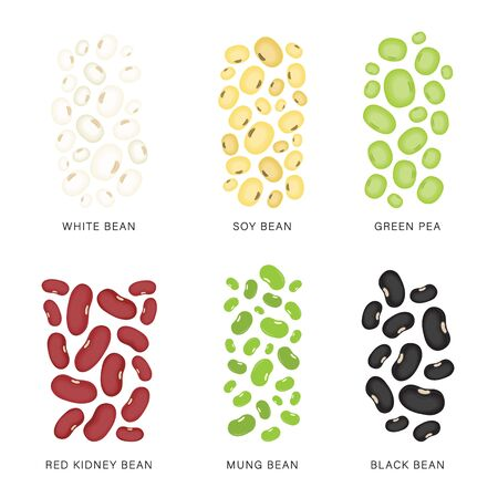 Set of Beans and nuts. Organic and healthy food Vector illustration.