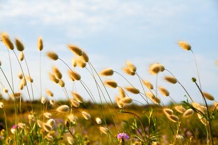 Closeup flowers in a marsh