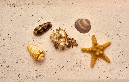 seashell and starfish at the beach Imagens