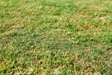 Green grass texture Imagens