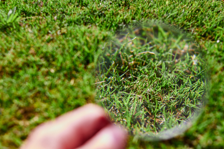 magnifying glass observing the grass with some water drops