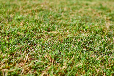 Green grass texture with som drops of water Imagens