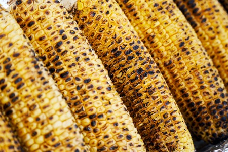 row of rosted corn cob Imagens