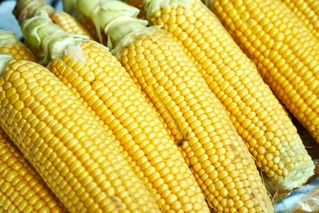 row of fresh corn cob