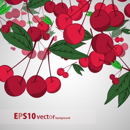 Cherry  background Stock Vector - 17148333