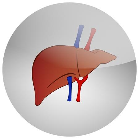 bile: human liver background