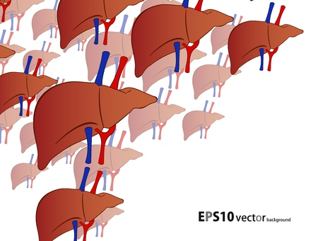 human liver background Stock Vector - 18067284