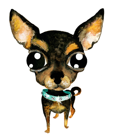 little dog: Hand drawn watercolor illustration without tracing. Cute chihuahua. Little dog in collar with pastes. Drawing isolated on white background.