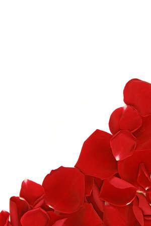 scattered: corner frame from scattered loose red rose petals