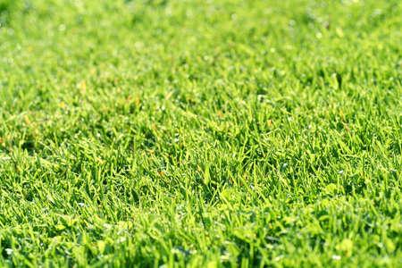 cut grass: freshly cut green grass lawn texture, horizontal