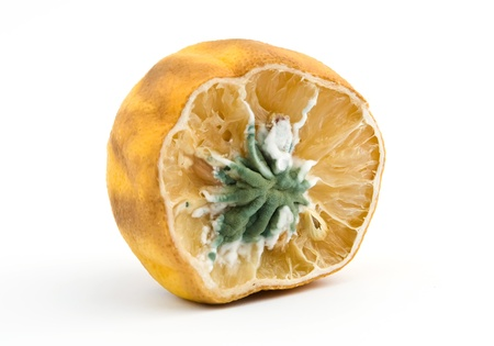 rotten fruit: moldy lemon isolated over white