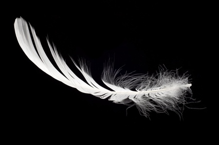 white swan feather isolated over black background Stock Photo - 9372314