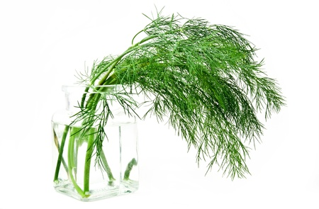 fresh green dill in vase isolated over white photo