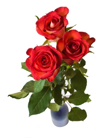 red roses: three red roses in vase. isolated over white Stock Photo