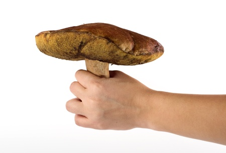 hand holds a big ceps mushroom over white background