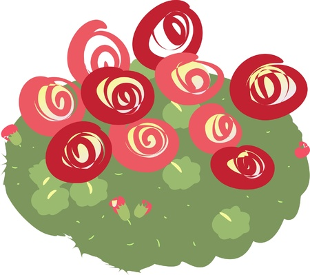 Bush of roses, blossom, red, buds, flowers, vector illustration