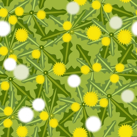 blowballs flowers on the meadow Vector
