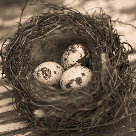 huevos codorniz: huevos de codorniz en un nido contra el fondo de madera