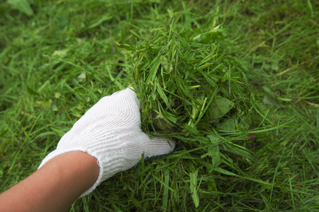 white glove: Hand in a white glove on the grass background. Little depth of field.
