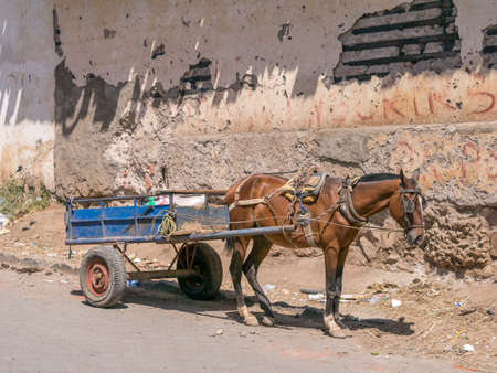 horse pull: Horse with horse-drawn carriage in Granada, Nicaragua