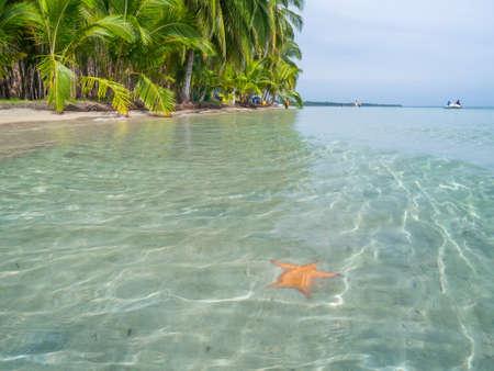 estrella de mar: Playa en Bocas del Toro, Panamá, América Central